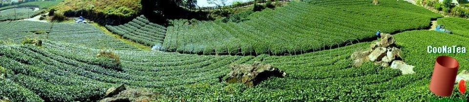 CooNaTea 源自阿里山茶區的高山茶