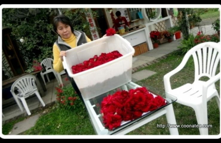 CooNaTea 阿里山夢幻玫瑰紅茶現場窨製處理