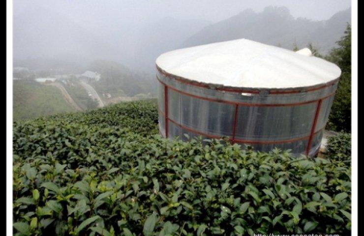CooNaTea 2012 亞美之露茶園